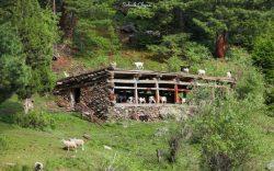 زیباییهای سومین پارک ملی افغانستان (ولایت نورستان)